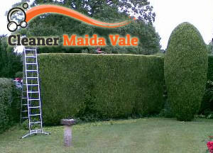 Hedge Maintenance Maida Vale